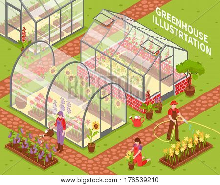 Colored isometric greenhouse composition with growing flowers in hotbeds and flower care vector illustration