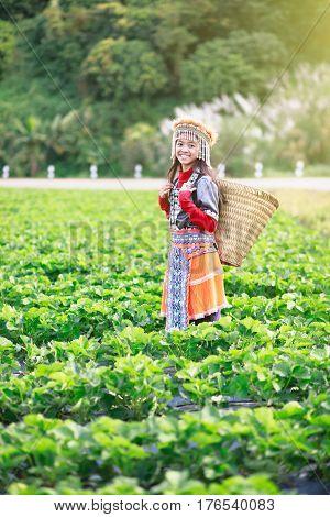 Little hill tribe farmer at strawberry field farm
