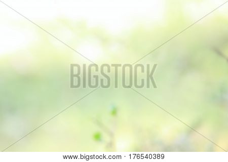 Spring natural background. Defocused branch with geen leaves in green and yellow.