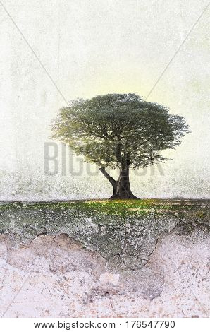Empty landscape with single cercis tree. Nature background. Copy space.