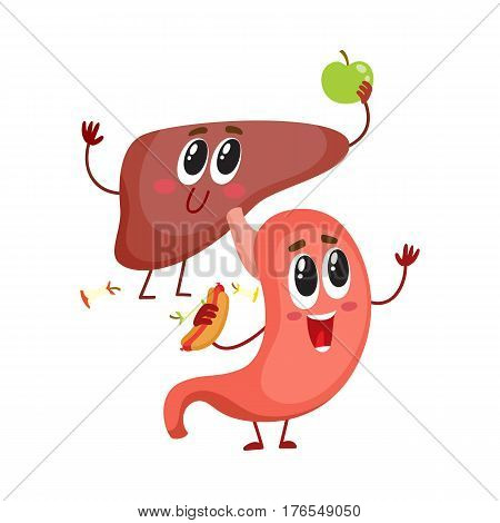 Cute and funny, smiling human stomach and liver characters, digestive organs, cartoon vector illustration isolated on white background. Healthy human stomach and liver characters, health care concept