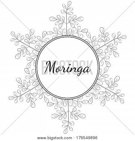 Moringa oleifera medicinal plant. Hand drawn botanical sketch illustration frame. Template banner.