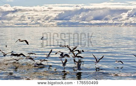 Sea gulls in the sea on top of the water