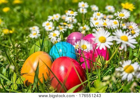 Beautiful View Of Colorful Easter Eggs Lying In The Grass Between Dasies And Dandelions In The Sunsh