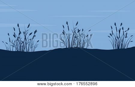 Silhouette of coarse grass on hill landscape vector art