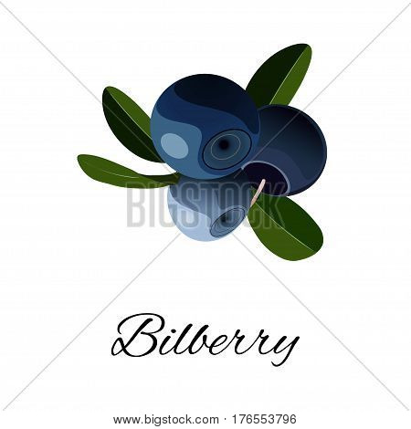 Bilberries isolated icon. Vector illustration for your design. for pattern badge label textile etc