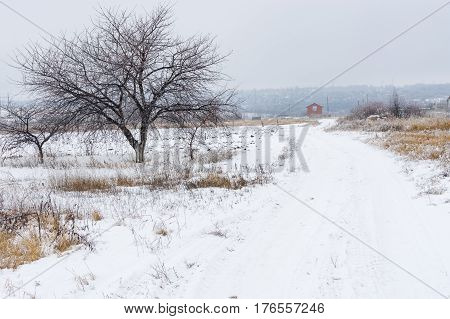 Country landscape with an earth road leading to lonely house in central Ukraine