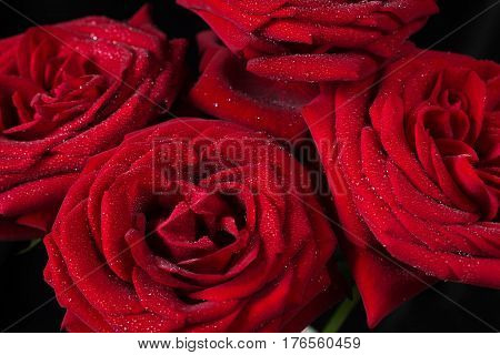 Bouquet of sumptuous red roses covered with water droplets isolated on a black background top view