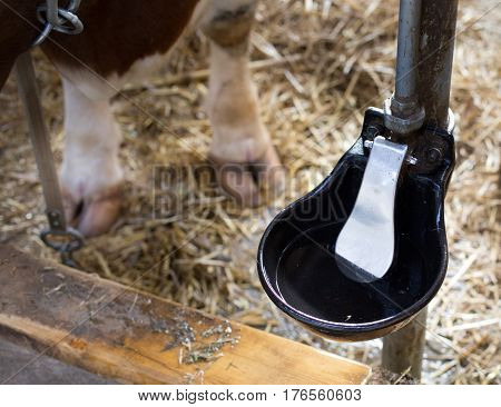 Automatic Water Bowl For Cattle