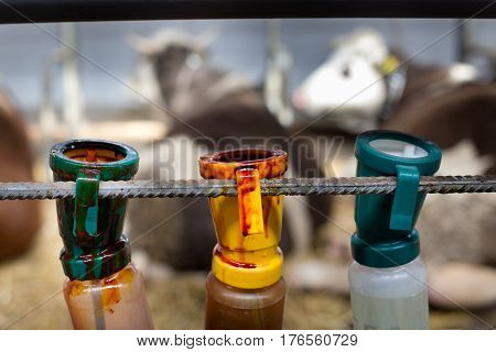 Disinfecting Bottles For Cow's Udder After Milking
