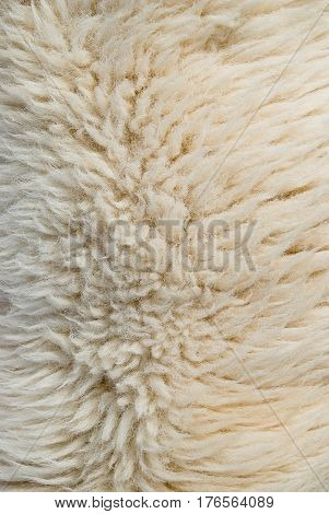 A Close-up of White wool (sheep) texture