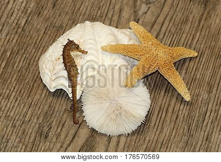 Sea shells, star fish and sea horse arranged on a brown weathered wood background.