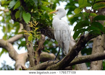 The egret perched on a tree branch