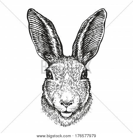Hand-drawn portrait of rabbit. Easter bunny, sketch. Vector illustration isolated on white background