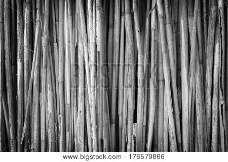 Wall of bulrush black and white background