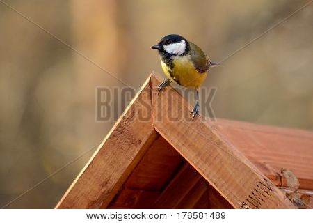 Titmouse sits on a wooden roof of a feeding trough