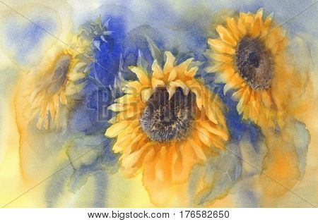 Bouquet of sunflowers on blue background watercolor. Summer feeling