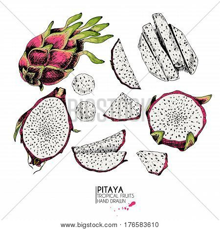 Vector hand drawn set of exotic fruits. Isolated pitaya. Engraved colored art. Delicious tropical vegetarian objects. Use for restaurant menu smoothie bowl market store party decoration meal