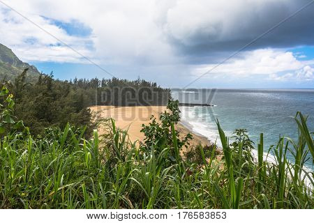 Sand beach and vegetation along Hanalei Bay in Kauai, Hawaii