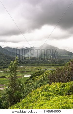 View of the fields at Hanalei Valley in Kauai, Hawaii