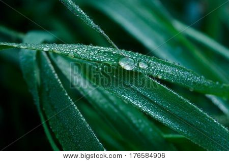A Blade of Grass and Water Droplets closeup