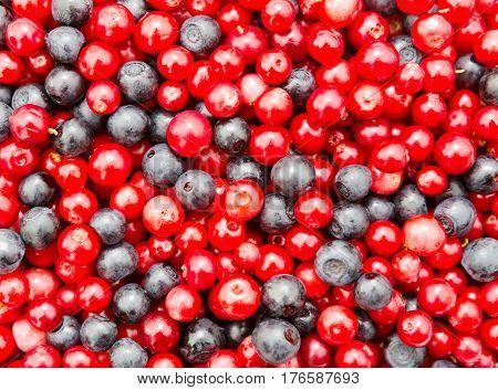 Cowberries and bilberries. Lingonberries. Forest berries. Food background.