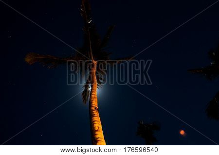 Bright NightSky with stars, clouds and coconut trees. New Providence Island, Nassau, Bahamas.