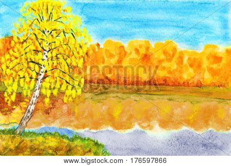 Hand painted picture watercolours autumn landscape - golden birch near lake with golden forest.
