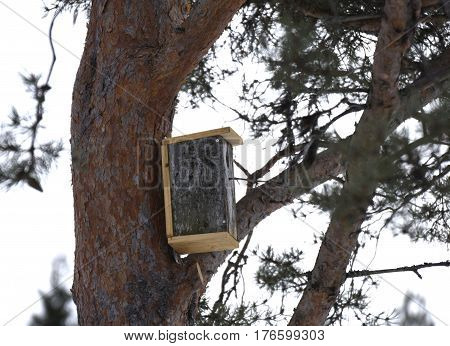 Renovated birdhouse on a fir picture from the North of Sweden.