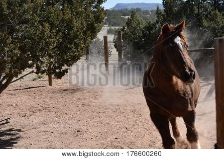 Large brown horse runs in dusty corral