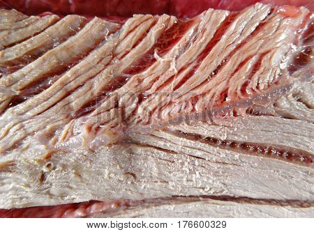 Close up view of boiled meat background