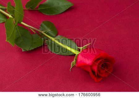 shot of a red rose over red background