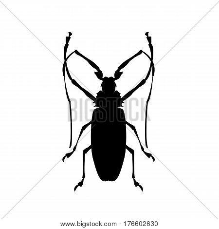pruner beetle vector illustration  black silhouette side