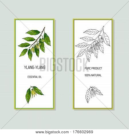 Ylang-ylang essential oil label. Hand drawn Vector illustration