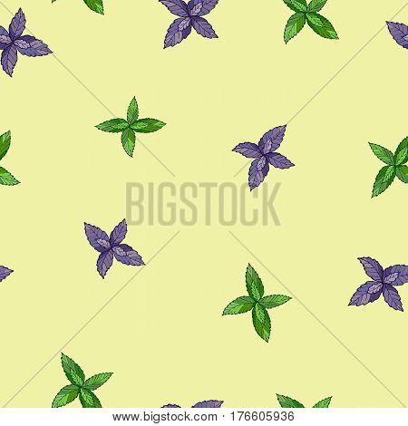 Basil, Thai basil, or sweet basil, culinary and aromatic herb. Seamless pattern. Vector illustration