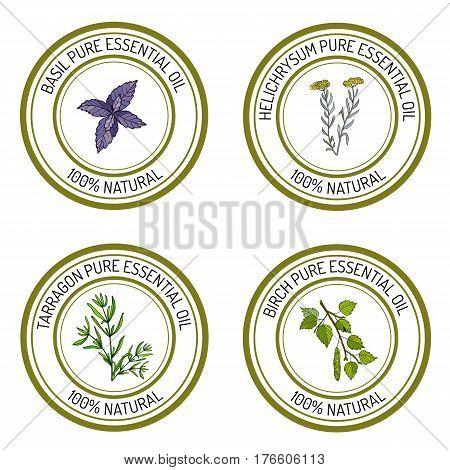 Set of essential oil labels basil tarragon birch helichrysum. Vector illustration