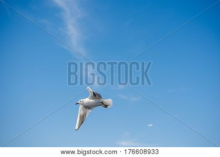 Seagull Flying In Sky Over The Sea Waters