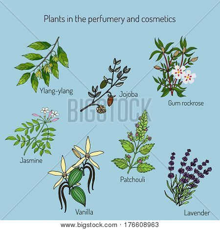 Plants in the perfumery and cosmetics. Vector illustration