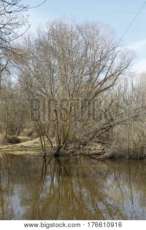 Image of a dry tree next to a river in winter