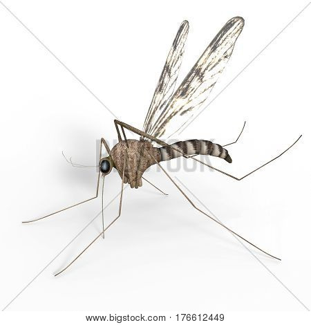 An isolated digital mosquito on white background 3d Illustration.