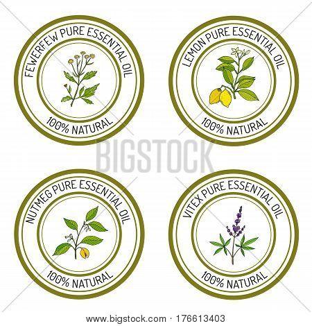 Set of essential oil labels lemon, fewerfew, nutmeg, vitex Vector illustration