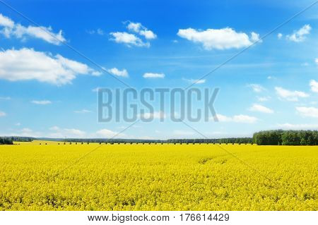 Panoramic view rapeseed field and line of trees against a cloudy blue sky