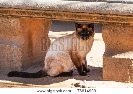 Beautiful cat hiding in under antique bench on Alhambra grounds, Granada