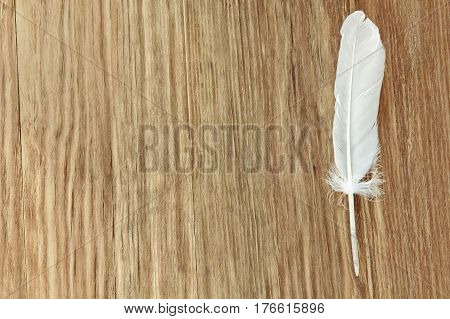 White bird feather on brown wooden background taken closeup with empty space for text.