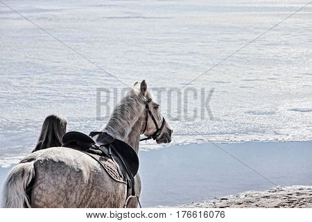 Girl and white horse on winter beach against of frozen sea.Unrecognizable person.Toned image.