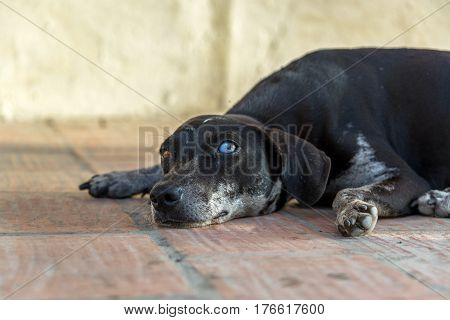 Eye Level View Of A Dog
