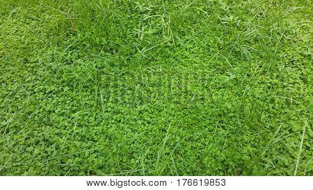 grama, mato, verde , natureza, beleza , vida , gramado poster