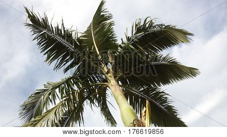Praia, Céu Azul e Árvore por do sol, Pôr do sol, sol, mar, praia