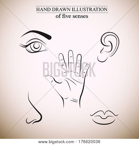 Hand drawn illustration of human senses made in line vector style. Template for businecc card and banner