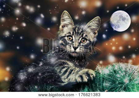 A cat sits on a tree and looks at the camera on a branch in a moonlit night.